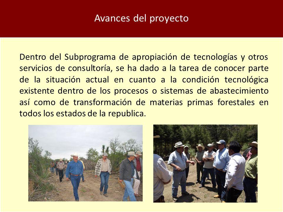 Avances del proyecto
