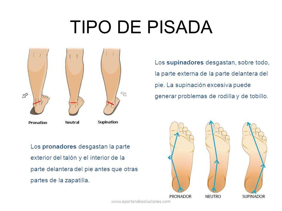 Famoso Partes De Pie Anatomía Imagen - Anatomía de Las Imágenesdel ...