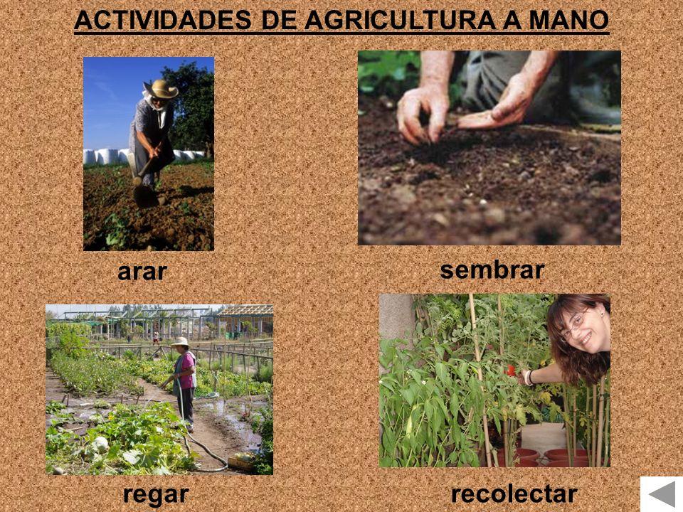 ACTIVIDADES DE AGRICULTURA A MANO