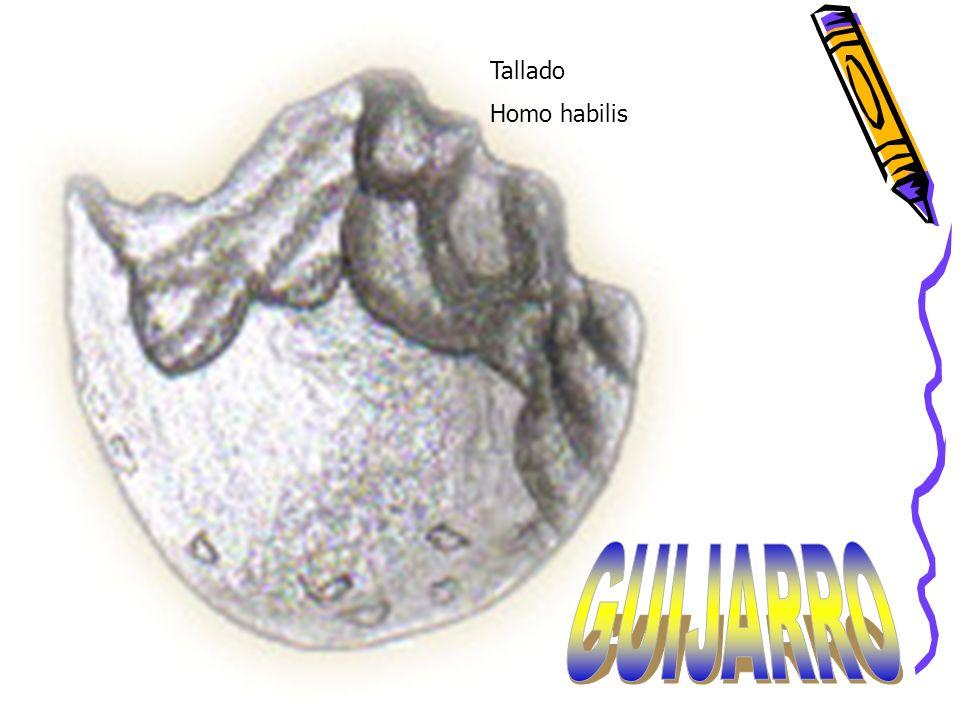 Tallado Homo habilis GUIJARRO