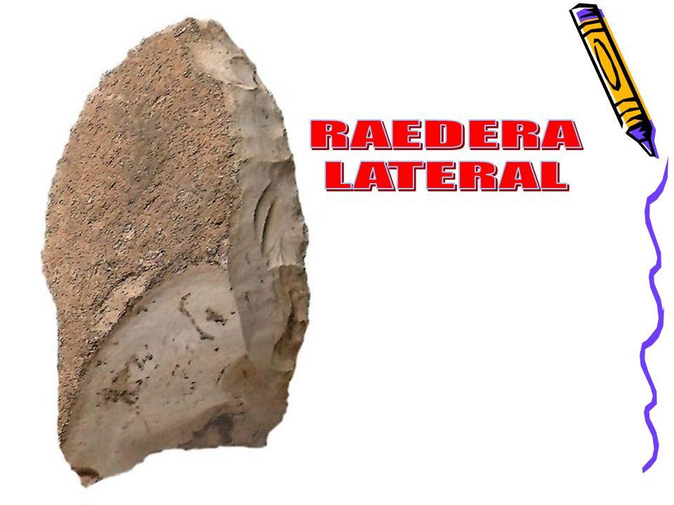 RAEDERA LATERAL