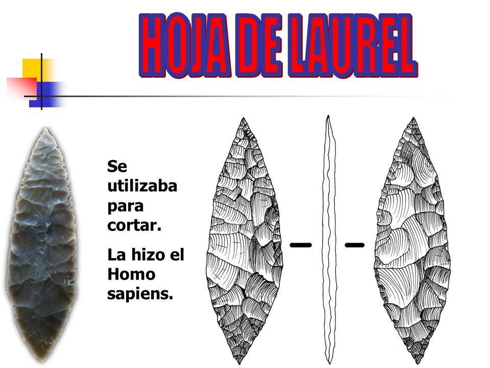 HOJA DE LAUREL Se utilizaba para cortar. La hizo el Homo sapiens.