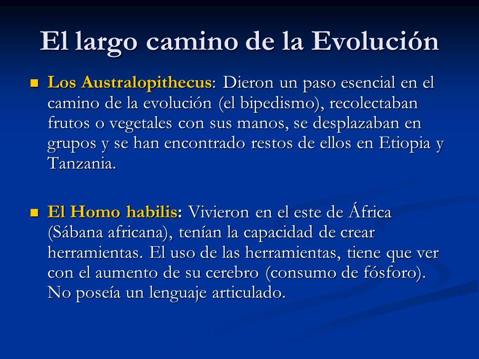 El largo camino de la Evolución