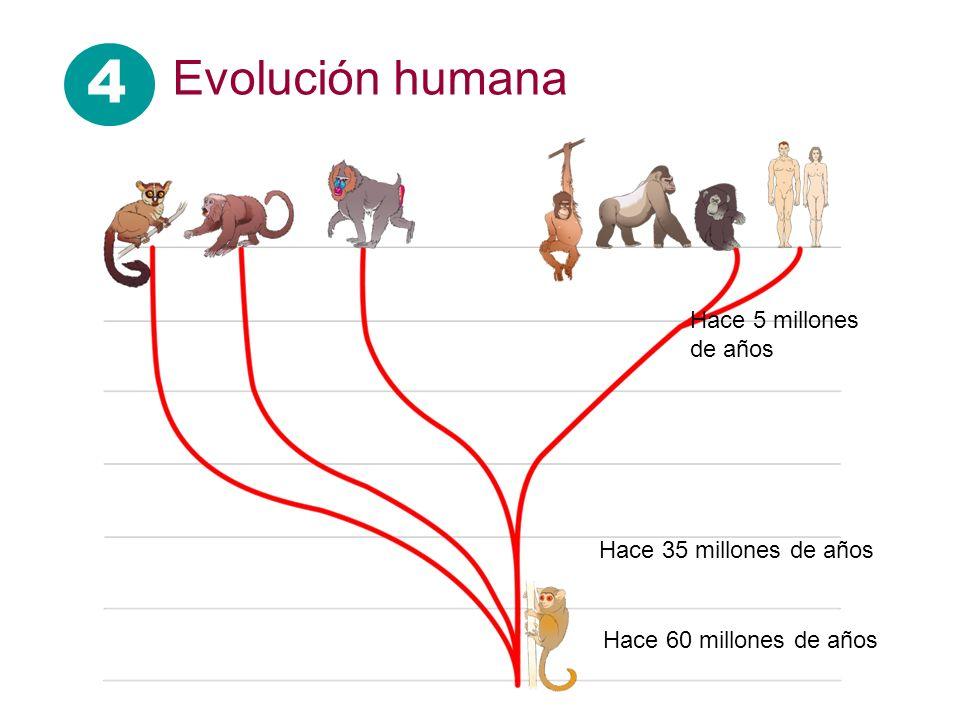 4 Evolución humana Hace 5 millones de años Hace 35 millones de años