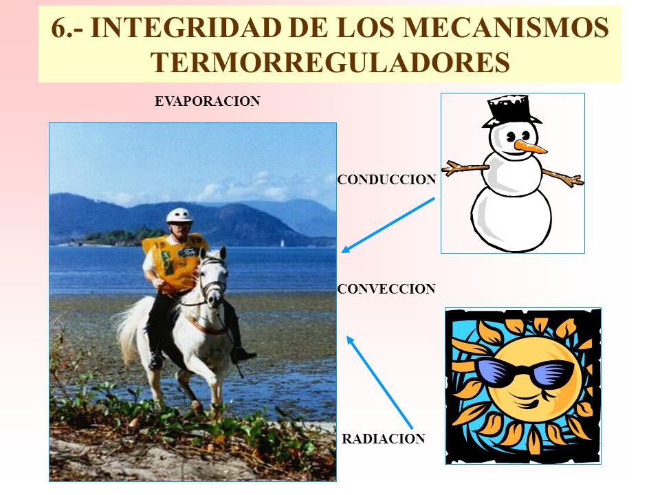 6.- INTEGRIDAD DE LOS MECANISMOS TERMORREGULADORES