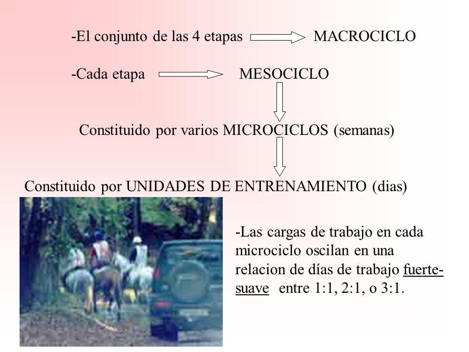 -El conjunto de las 4 etapas MACROCICLO