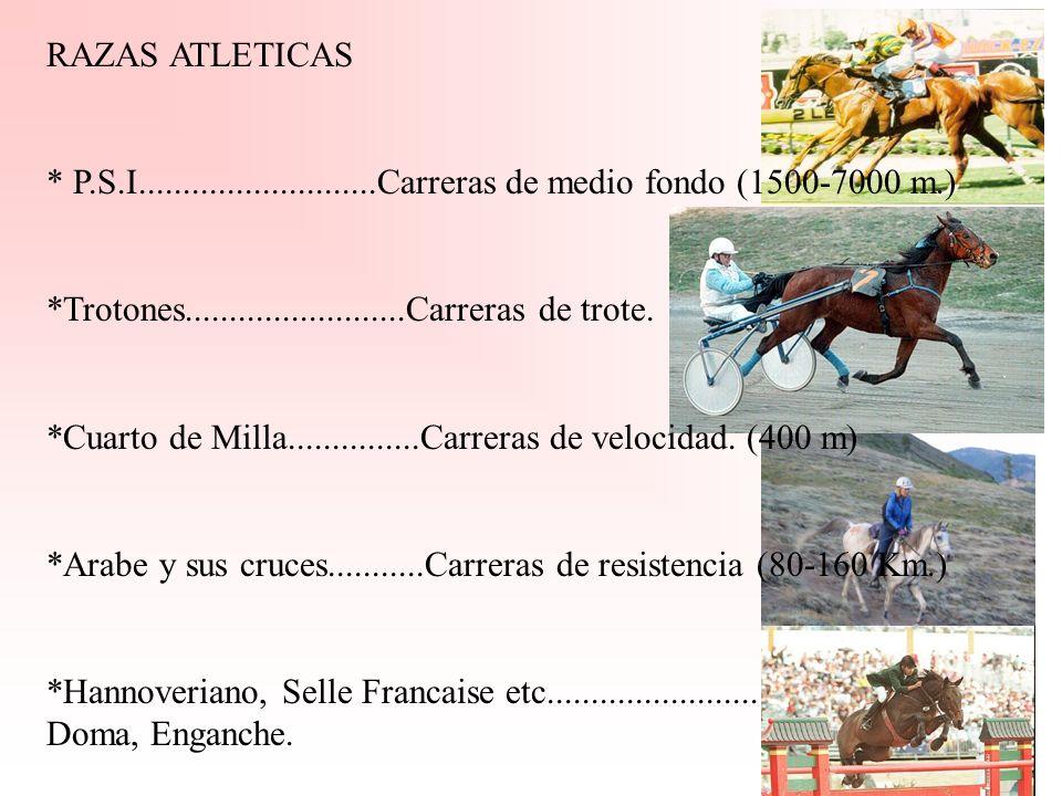 RAZAS ATLETICAS* P.S.I...........................Carreras de medio fondo (1500-7000 m.) *Trotones.........................Carreras de trote.