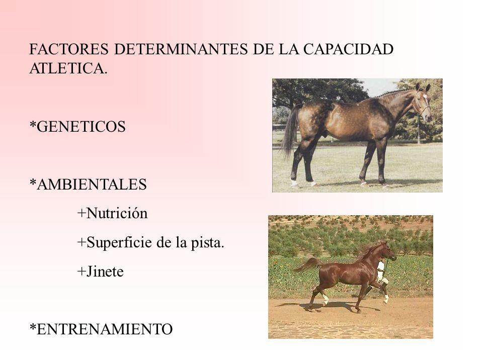 FACTORES DETERMINANTES DE LA CAPACIDAD ATLETICA.