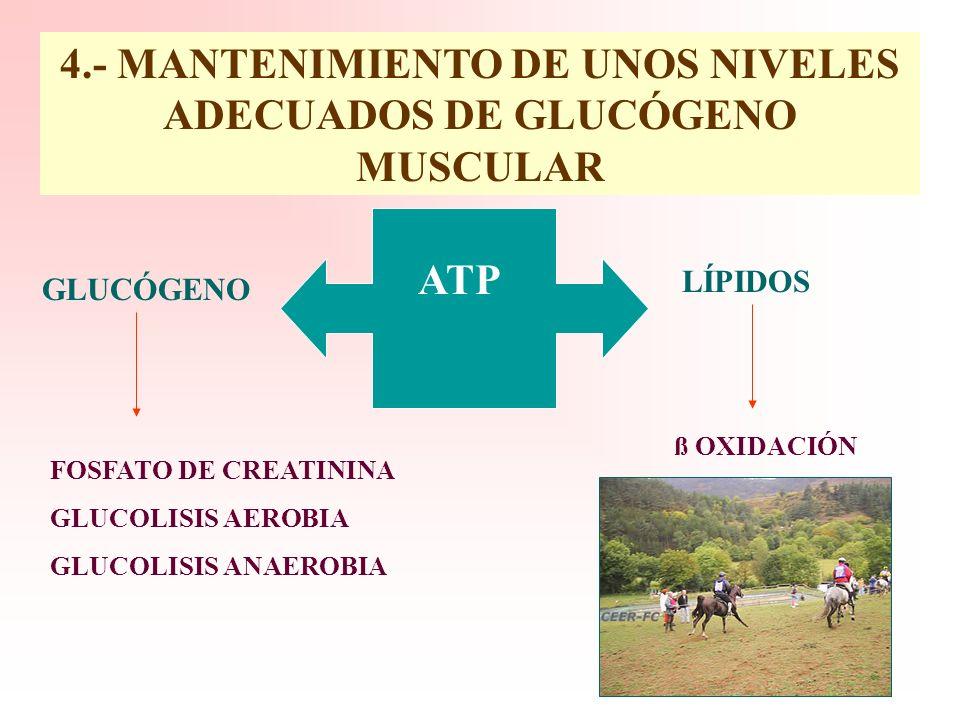 4.- MANTENIMIENTO DE UNOS NIVELES ADECUADOS DE GLUCÓGENO MUSCULAR