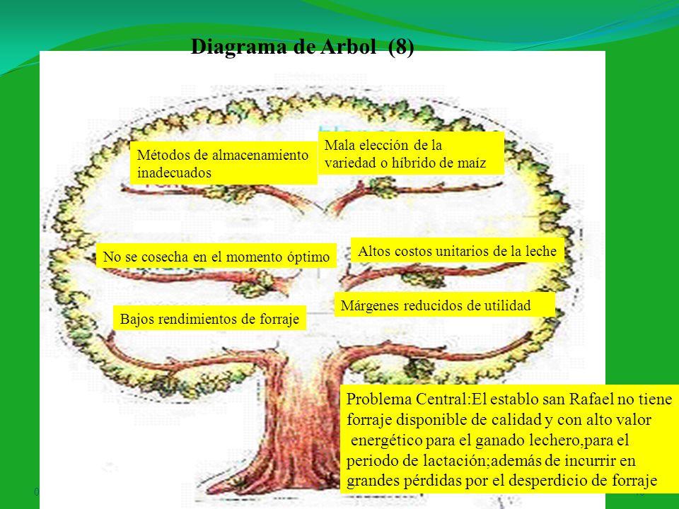Diagrama de Arbol (8) Problema Central:El establo san Rafael no tiene
