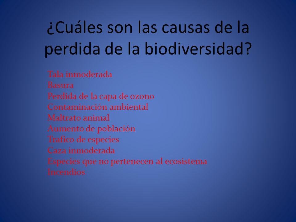 La Perdida De Valoracion De La Biodiversidad Causas Y