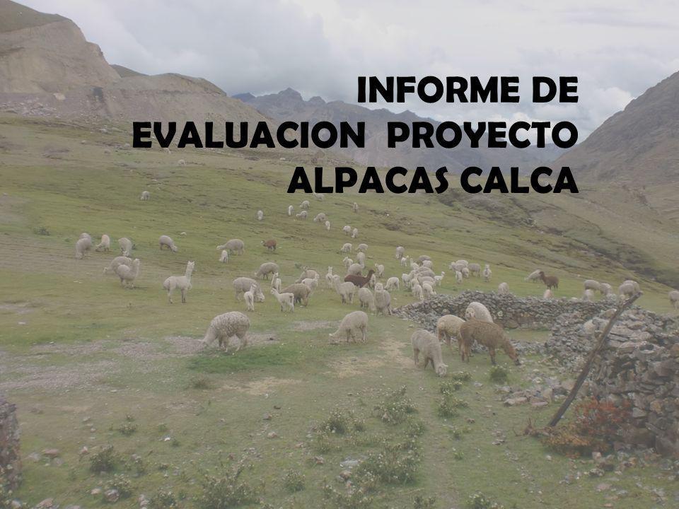 INFORME DE EVALUACION PROYECTO ALPACAS CALCA