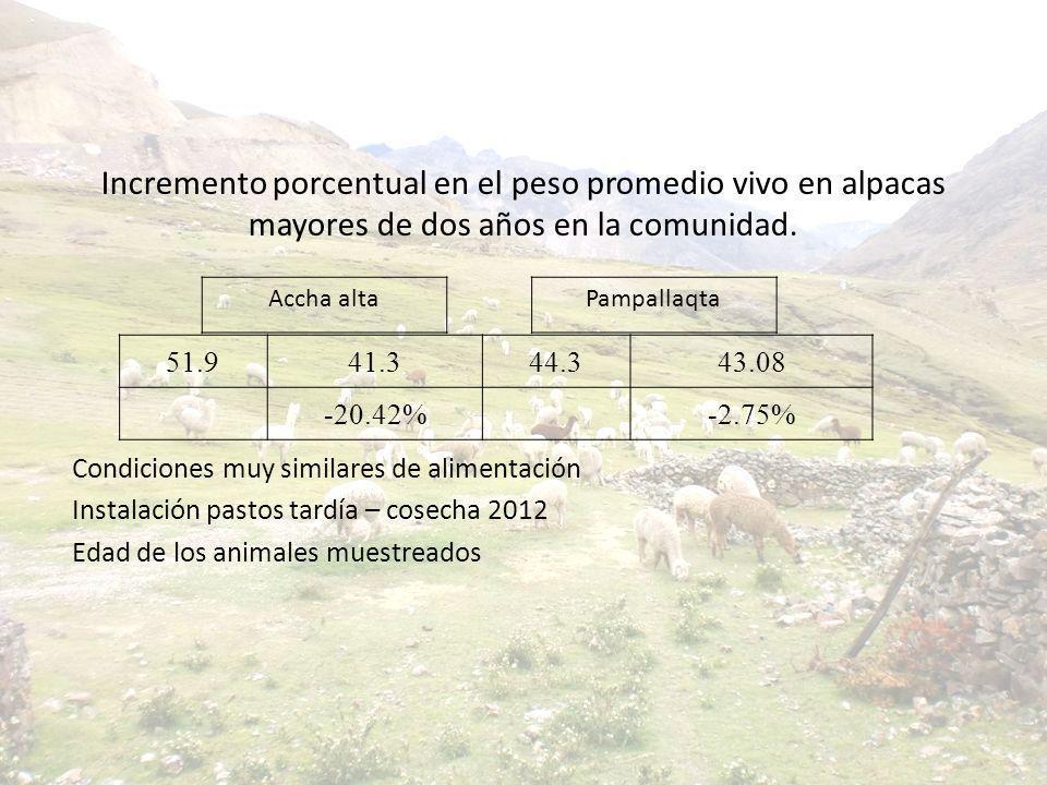 Incremento porcentual en el peso promedio vivo en alpacas mayores de dos años en la comunidad.