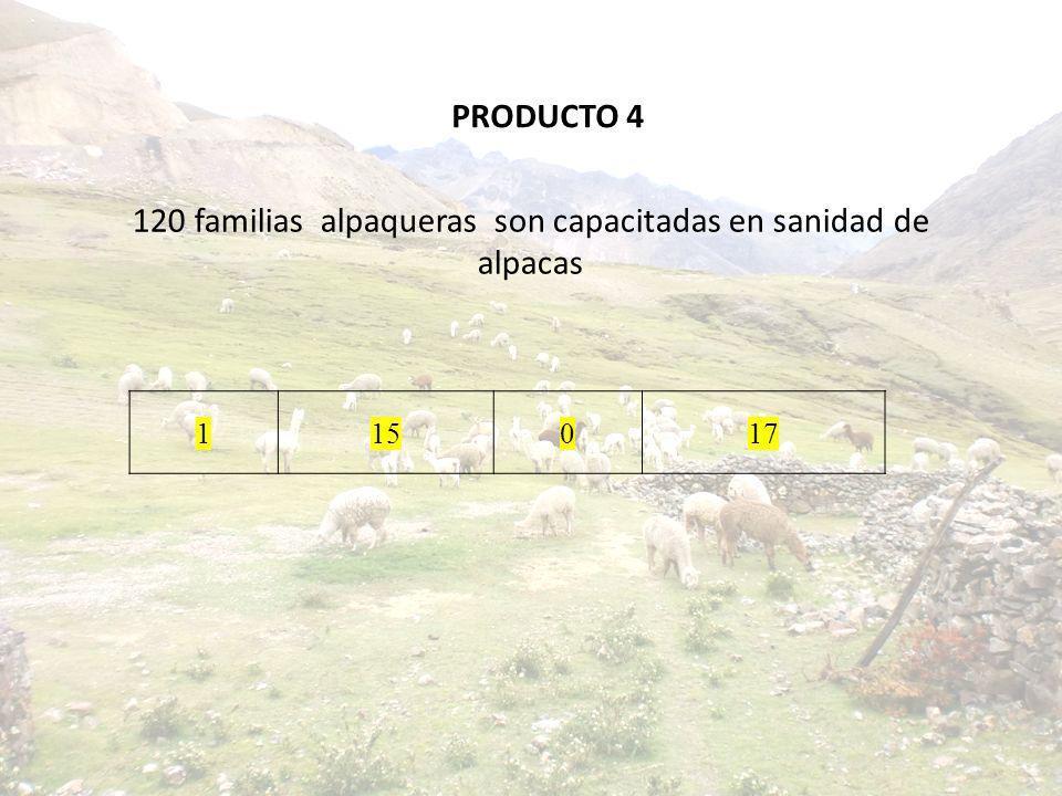 120 familias alpaqueras son capacitadas en sanidad de alpacas