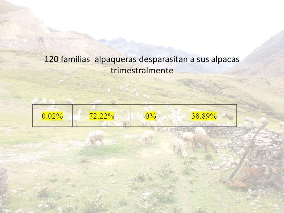 120 familias alpaqueras desparasitan a sus alpacas trimestralmente