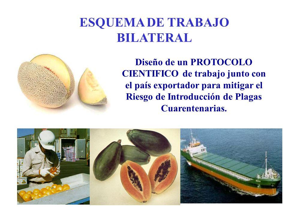 ESQUEMA DE TRABAJO BILATERAL