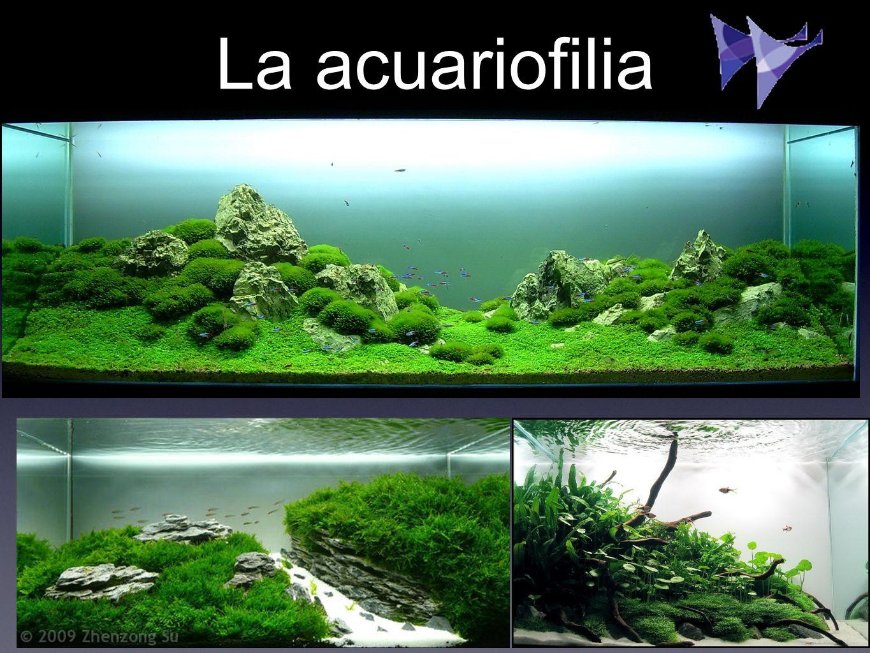 La acuariofilia
