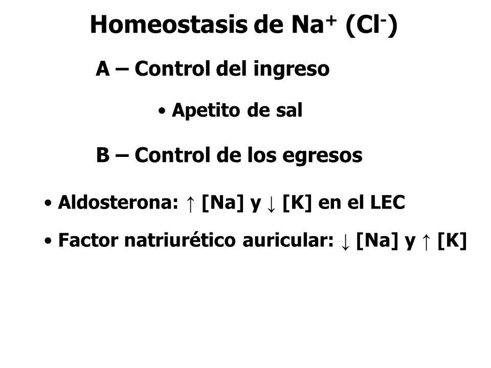 Homeostasis de Na+ (Cl-)