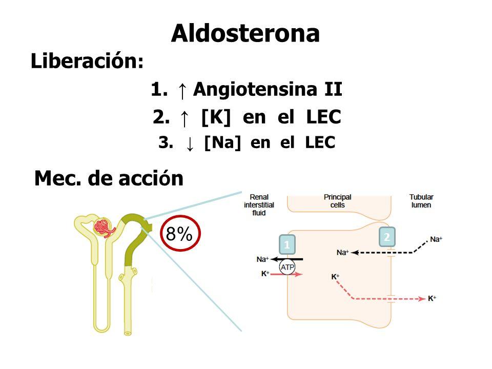 Aldosterona Liberación: Mec. de acción ↑ Angiotensina II