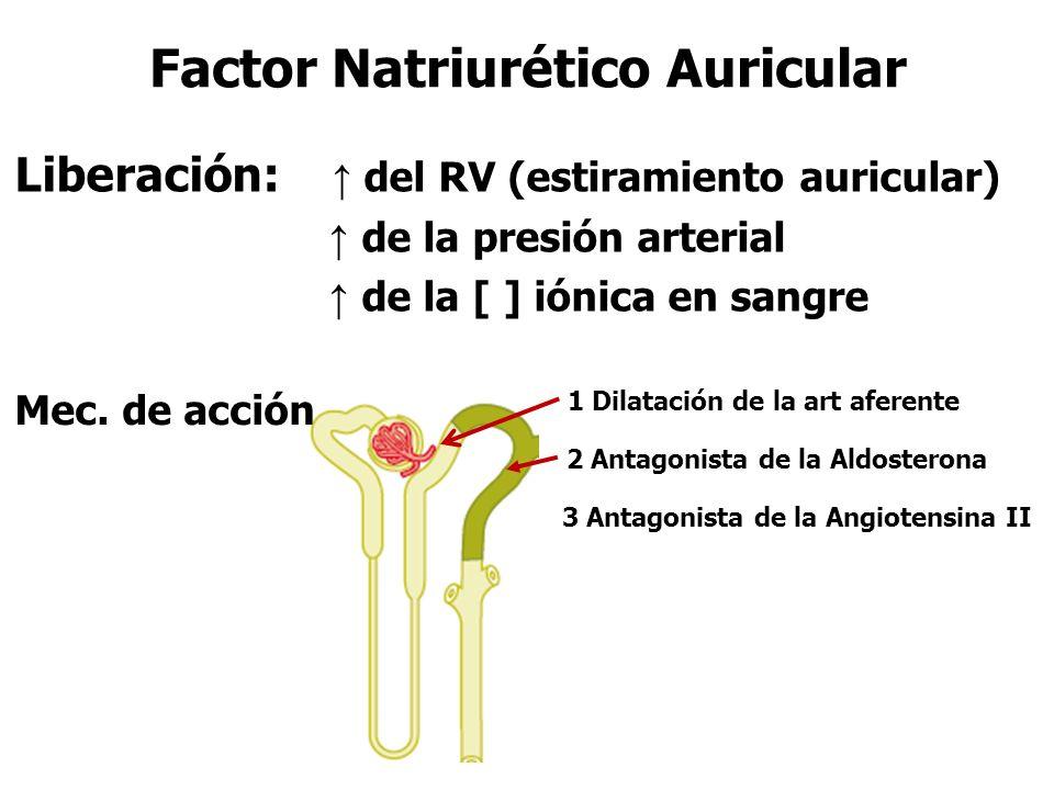 Factor Natriurético Auricular