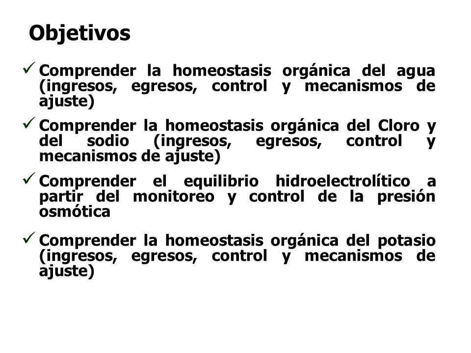 Objetivos Comprender la homeostasis orgánica del agua (ingresos, egresos, control y mecanismos de ajuste)