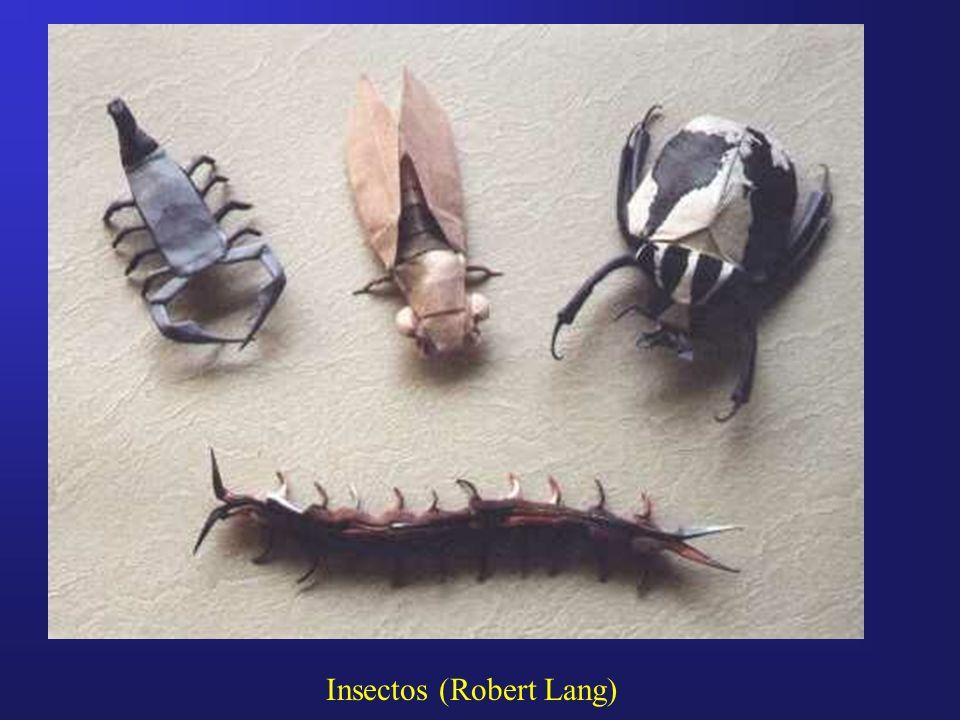 Insectos (Robert Lang)