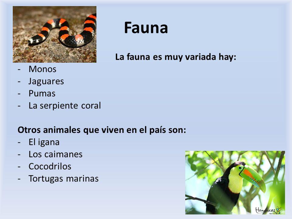Fauna La fauna es muy variada hay: Monos Jaguares Pumas