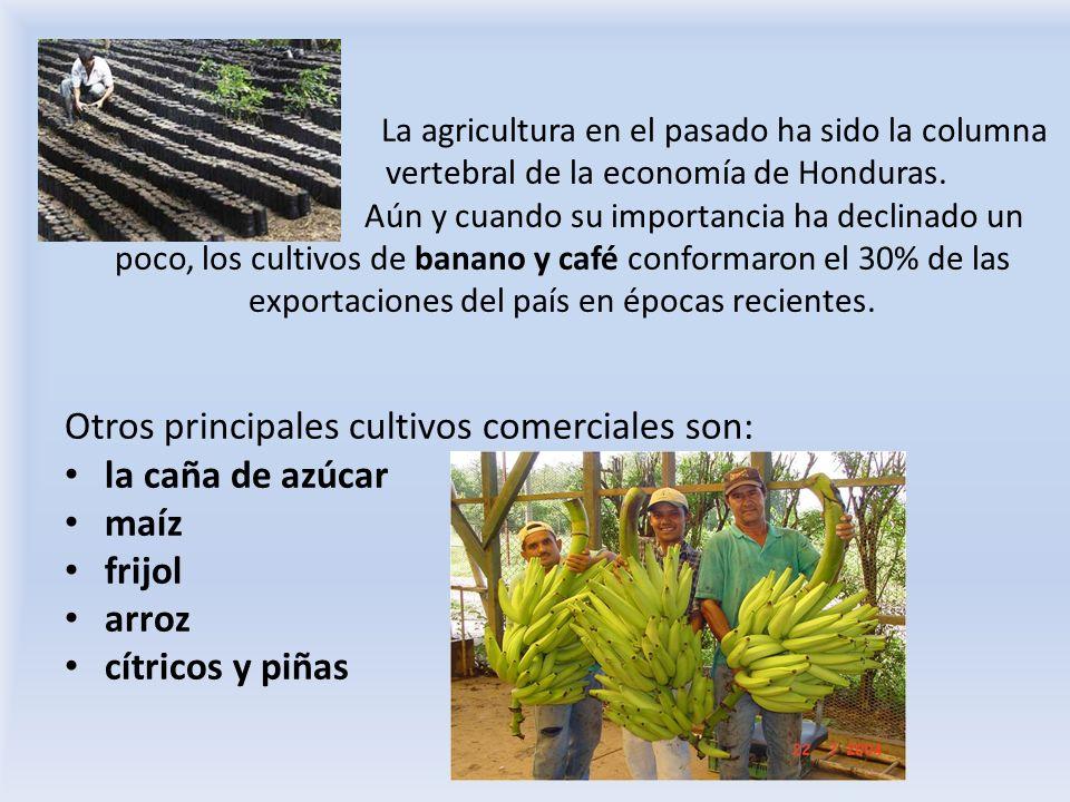 Otros principales cultivos comerciales son: la caña de azúcar maíz