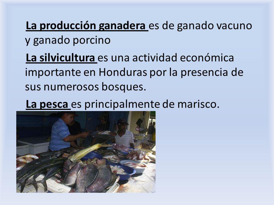 La producción ganadera es de ganado vacuno y ganado porcino La silvicultura es una actividad económica importante en Honduras por la presencia de sus numerosos bosques.