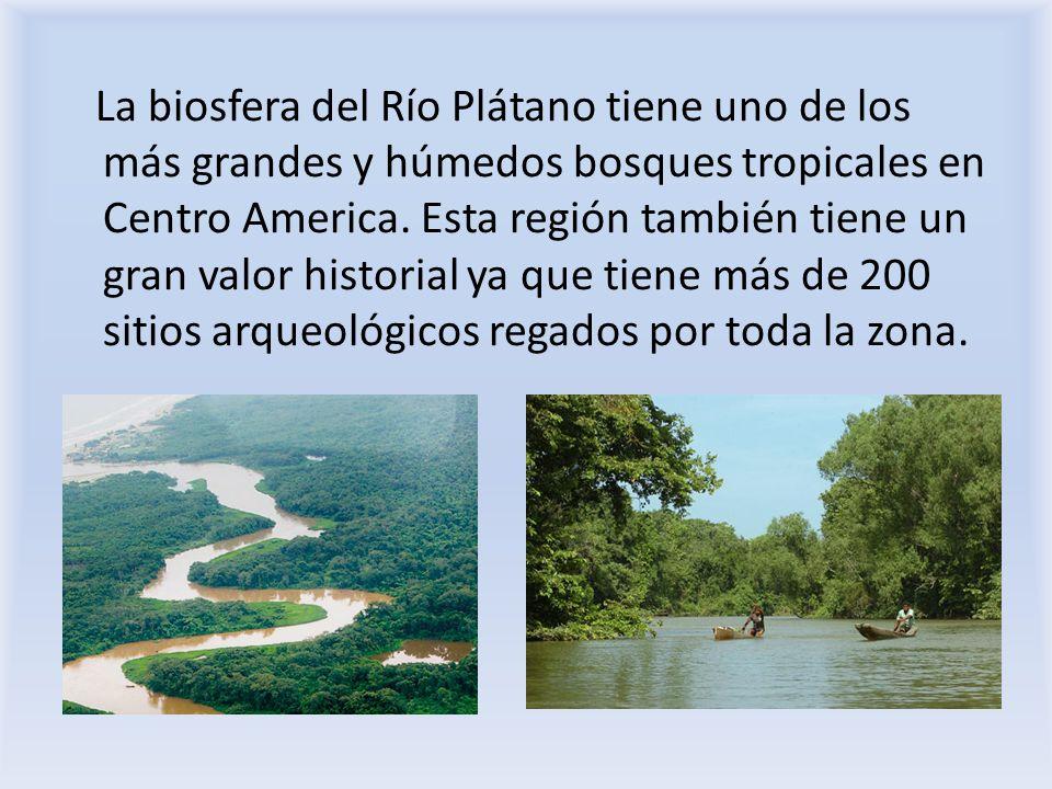 La biosfera del Río Plátano tiene uno de los más grandes y húmedos bosques tropicales en Centro America.
