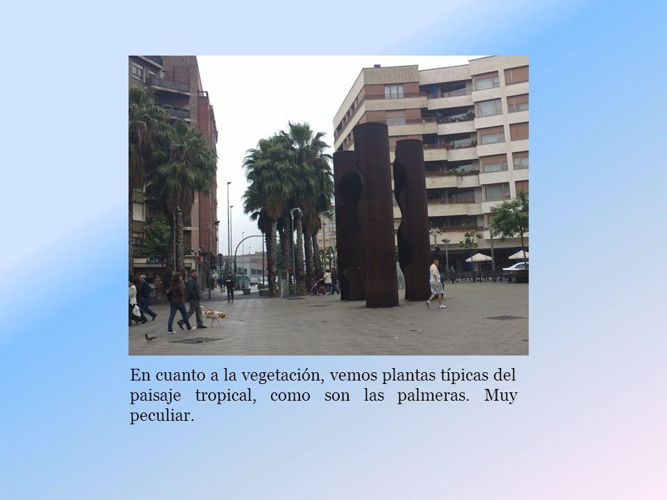En cuanto a la vegetación, vemos plantas típicas del paisaje tropical, como son las palmeras.