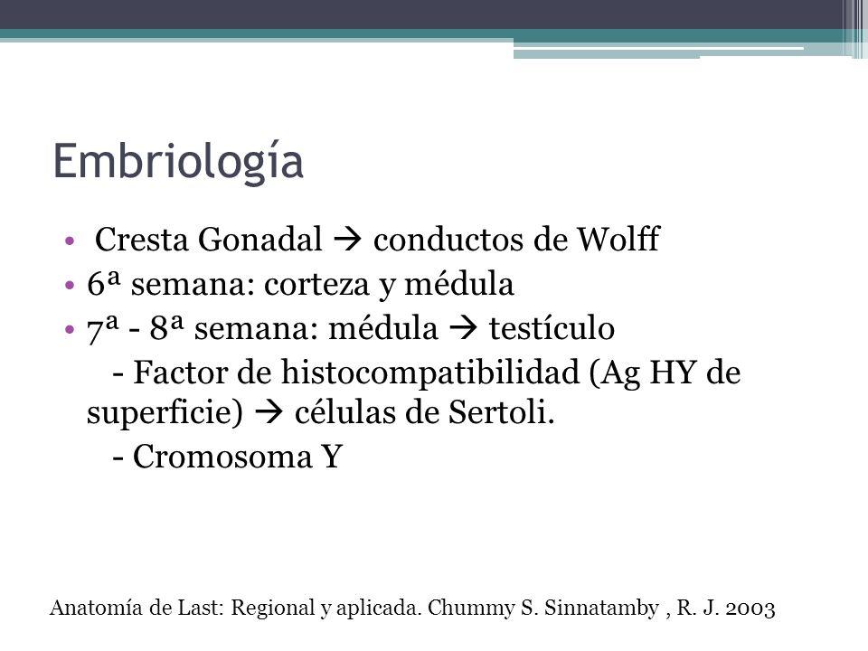 Embriología Cresta Gonadal  conductos de Wolff