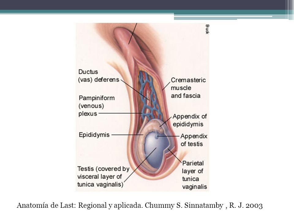 Anatomía de Last: Regional y aplicada. Chummy S. Sinnatamby , R. J