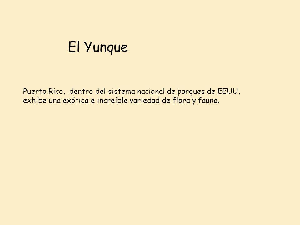 El Yunque Puerto Rico, dentro del sistema nacional de parques de EEUU,