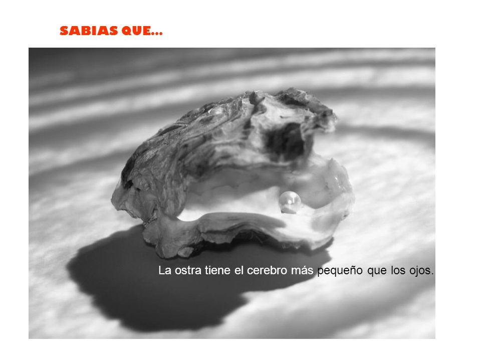 La ostra tiene el cerebro más pequeño que los ojos.