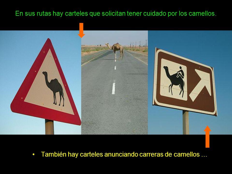 En sus rutas hay carteles que solicitan tener cuidado por los camellos.