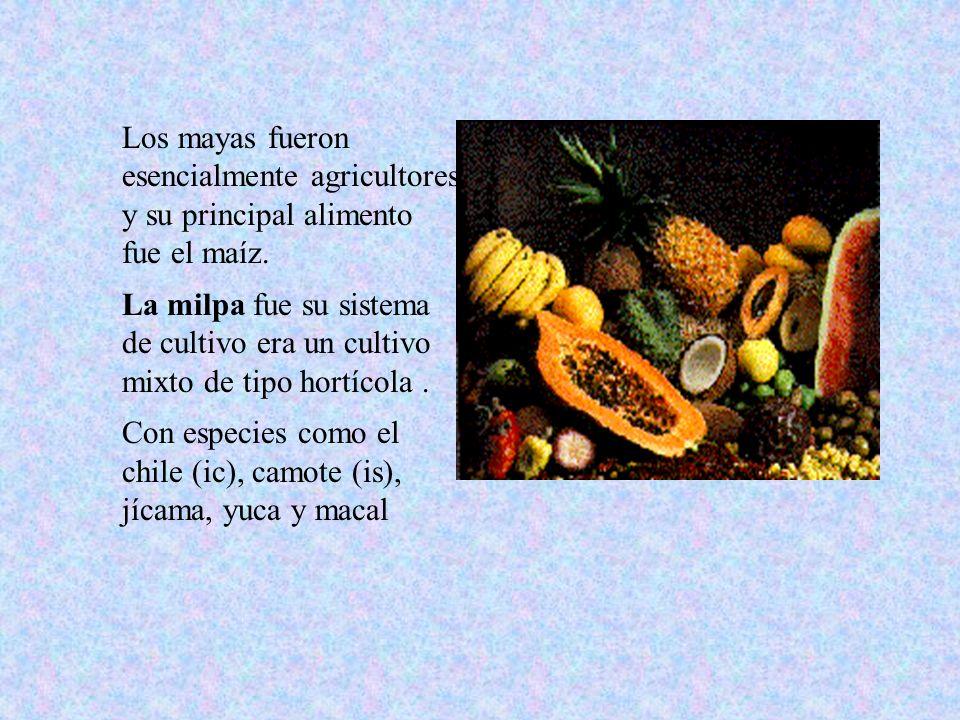 Los mayas fueron esencialmente agricultores y su principal alimento fue el maíz.