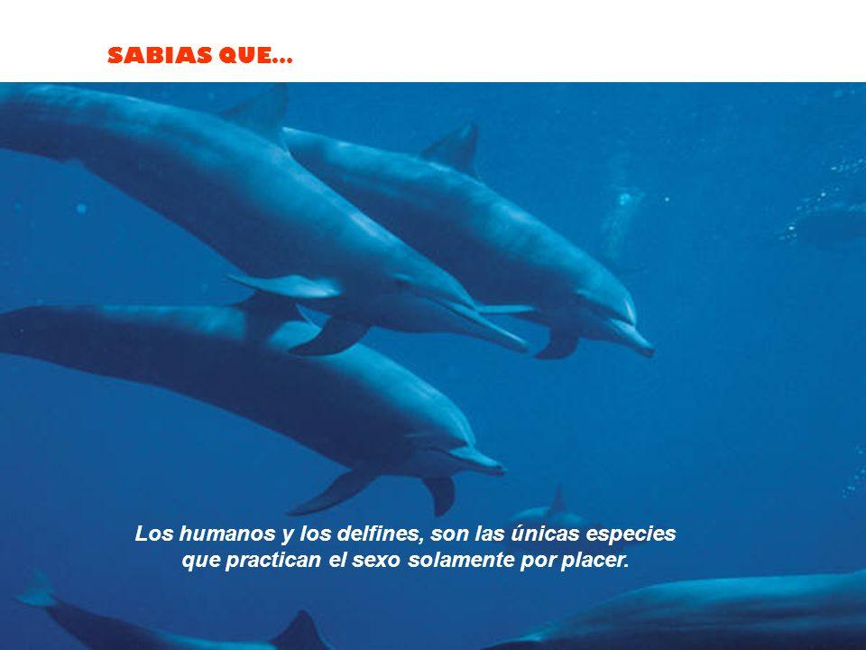 Los humanos y los delfines, son las únicas especies