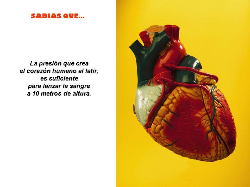 el corazón humano al latir,