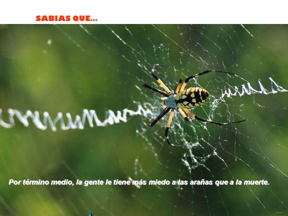 Por término medio, la gente le tiene más miedo a las arañas que a la muerte.