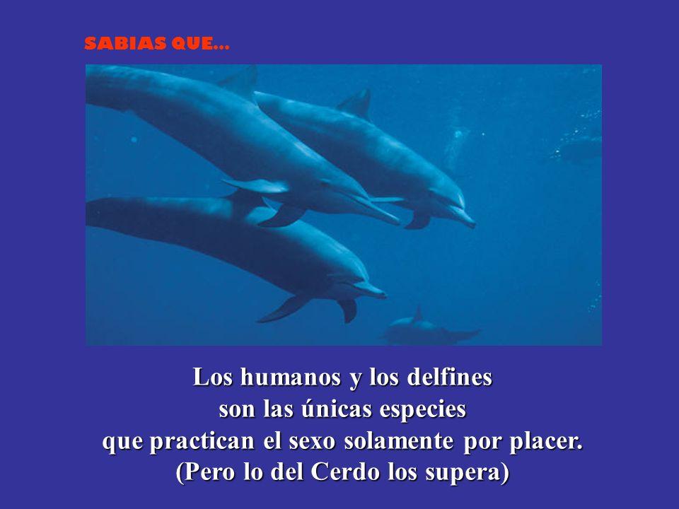 Los humanos y los delfines son las únicas especies