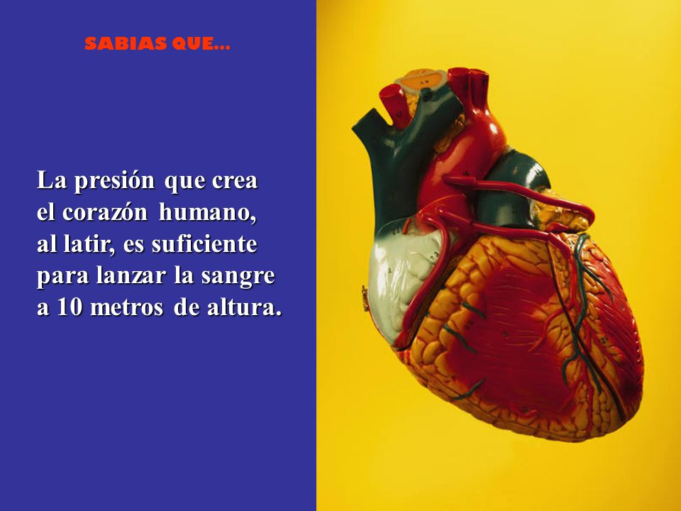 La presión que crea el corazón humano, al latir, es suficiente.