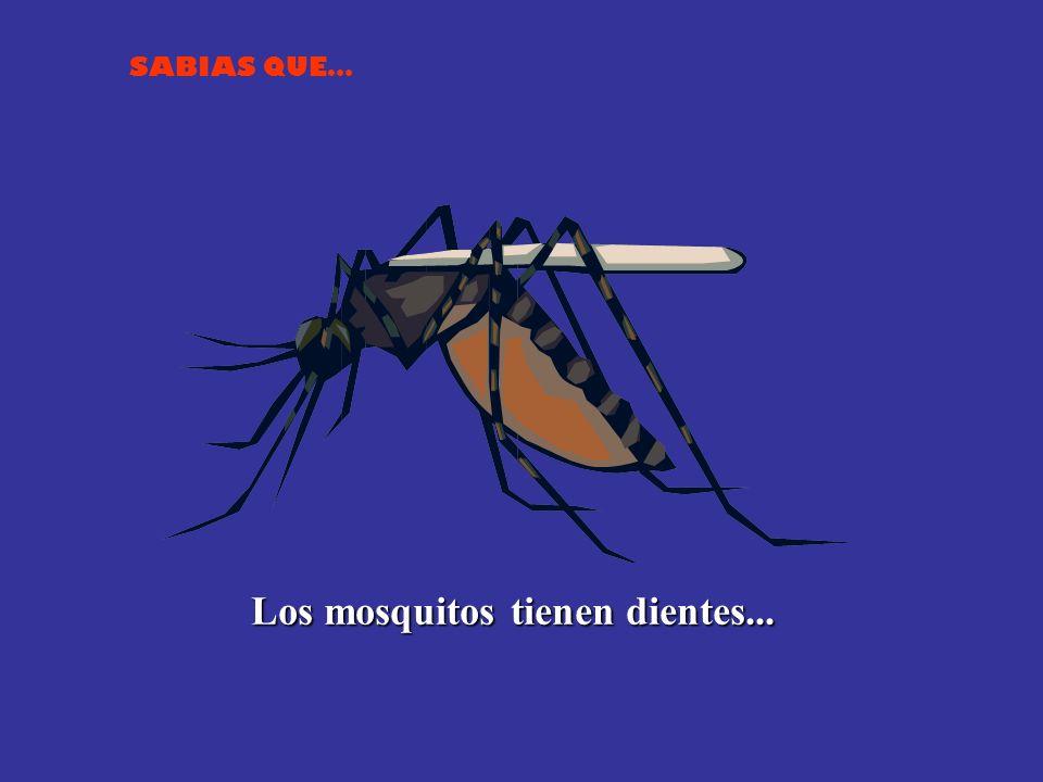 Los mosquitos tienen dientes...