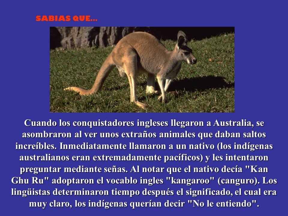Cuando los conquistadores ingleses llegaron a Australia, se asombraron al ver unos extraños animales que daban saltos increíbles.