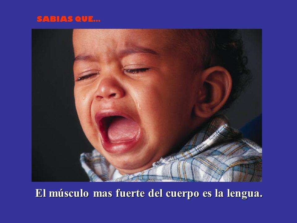 El músculo mas fuerte del cuerpo es la lengua.