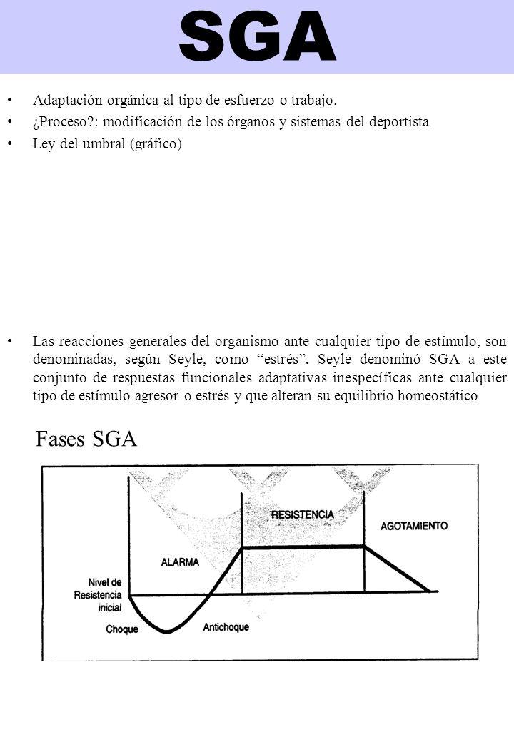 SGA Fases SGA Adaptación orgánica al tipo de esfuerzo o trabajo.