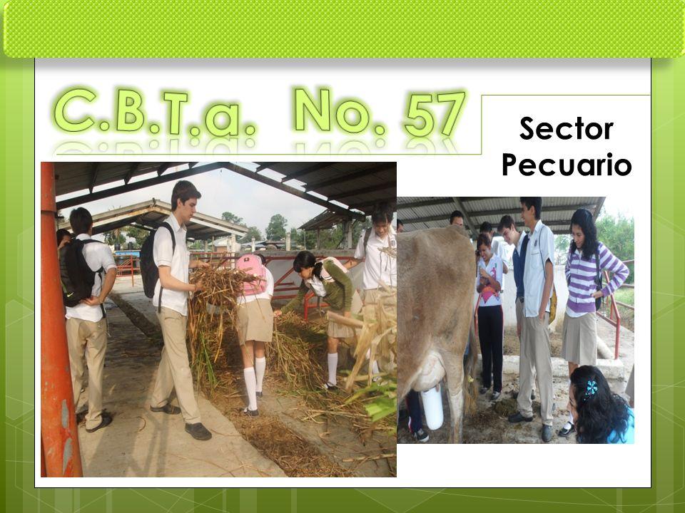 C.B.T.a. No. 57 Sector Pecuario