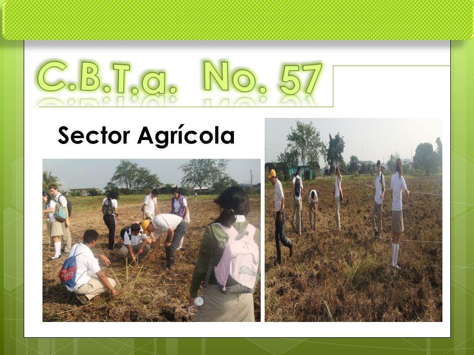 C.B.T.a. No. 57 Sector Agrícola