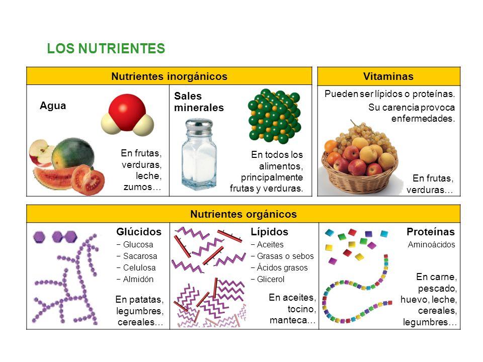 Nutrientes inorgánicos