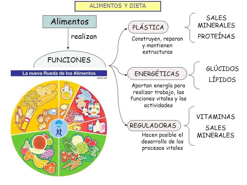 Alimentos realizan FUNCIONES SALES MINERALES PROTEÍNAS PLÁSTICA